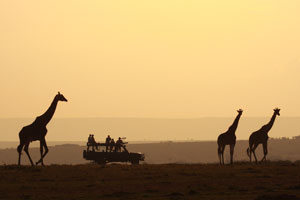 Sunset with Giraffe