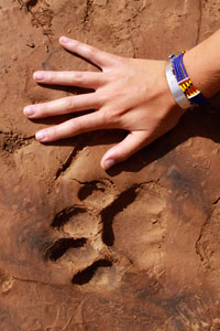 Footprints in the sand, Shaba