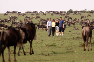 Guest with wildebeest