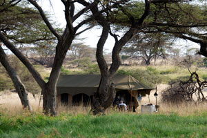 Lowis & Leakey camp, Shaba