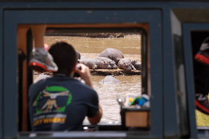 Watching hippos on the Mara river