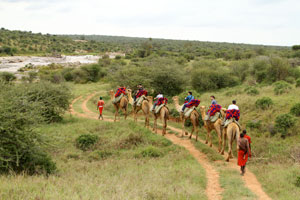Walking with Camels in Laikipa