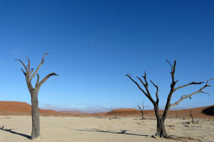 dead trees in the salt pans