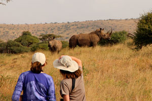 Watching rhino on a hike at Lewa