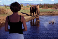 Watching elephant on  Kariba damn